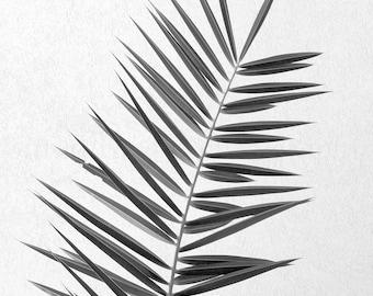 Black & White Print, Palm Tree Print, Palm Art, Island Print, Black White Photography, Palm Print, Palm Leaf,Tropical Wall Art,BW Palm Frond
