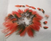 LP16-JAS-4-1 -  Lot of 35 Lovely Little Green & Red Feathers - Male Solomon Islands Eclectus - Parrot Feathers