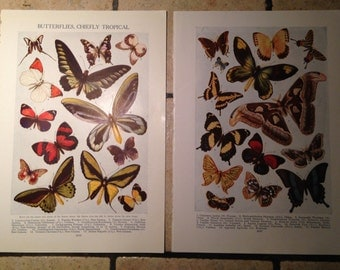 1947 Butterflies, Chiefly Tropical Vintage Illustrations
