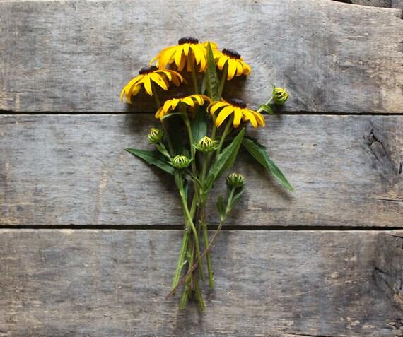 Black Eyed Susan // organic heirloom flower seeds // from our farm // eco friendly gardener gift // organic gardening // wildflower garden