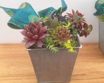 Succulent  Dish Garden in a Square tin