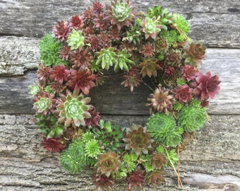 Succulent Wreath Round 14 inch  WINTER HARDY!