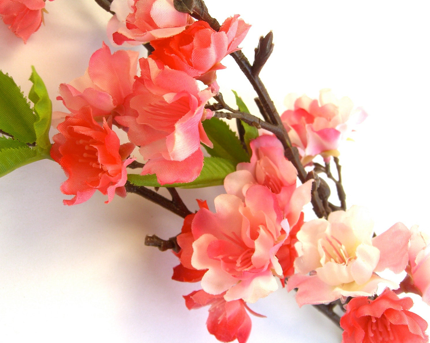 Salmon Cherry Blossoms Peachy Orange Flowers Floral