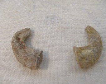 Matched Pair of Fossil Horn Coral Pieces for Art / Craft Supply - Figure Making