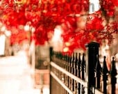 Red Fall City Photography, Black and Scarlet Modern Office Decor - Fine Art Print - Large Wall Art