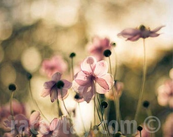 Flower Photography, Anemones, Green, Pink, Flower Photos, Shabby Chic, Olive Green, Sage, Pastel, Pink