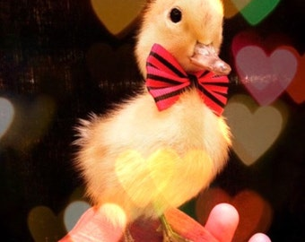 Accessories for Taxidermy Ducklings: Bow tie, Eyelashes, Hat, Rose, Painted base