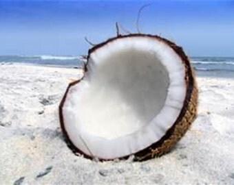 Coconut Skin Safe Fragrance Oil 1 ounce