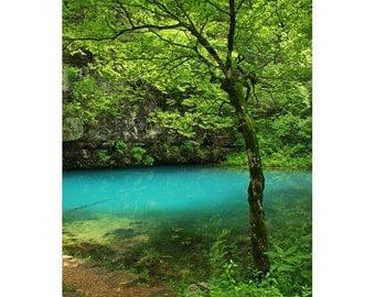 Fine Art Color Photography of Tree and Blue Spring