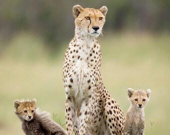 Mom and Baby Animal Photography, Cheetah Mother & Cub Photograph, Baby Animals, Wildlife Photography, Safari Nursery Art, Animal Twins, Cat
