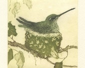 Anna's Hummingbird Nest, original fine art etching