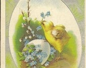 Little Yellow Chick with Pussy Willows and Forget-me-Nots in Shell – Charming Vintage Easter Postcard 1912