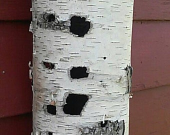 Bare Naked Natural Birch Bark Vase Wrap