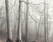 forest photography, landscape photography, woodland, fog, trees, trees in fog, autumn, winter trees, Autumn Forest