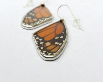 Monarch Butterfly / Real Butterfly / Butterfly Wing Earrings / Butterfly Jewelry