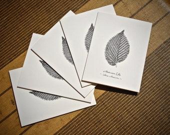 5-Notecard Set: American Elm Leaf