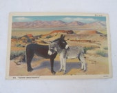 Linen Postcard, ''Desert Sweethearts'' Pair of Burros, Unused