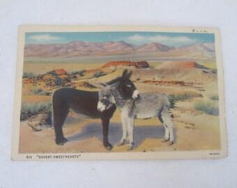 Linen Postcard, ''Desert Sweethearts'' Pair of Burros, Unused