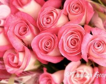 Pink Roses Photo Notecard