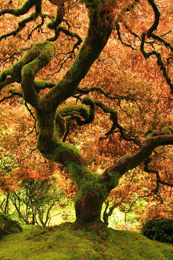 Japanese Garden Fall T...