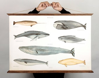 LARGE A1 Whales Canvas poster - vintage illustration educational chart  WAP2001