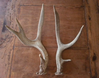 Two real deer antlers design decor crafts art centerpiece gift rustic natural antler sheds lamp display