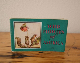 Vintage Wild Flowers Of America Book Vintage Jane Harvey Wild Flowers Book Whitman Publishing Wild Flower Book from The Eclectic Interior