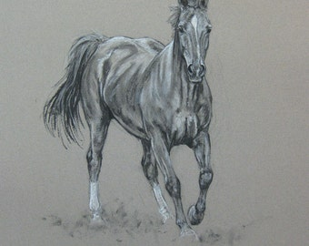 Original horse art equine art energy and movement equine horse charcoal and chalk movement art drawing 'Looking' by H Irvine