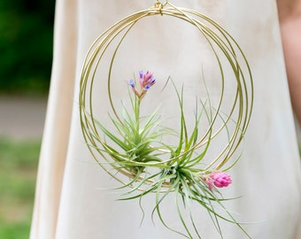Medium Blooming Tillandsia Ornaments, air plant ornaments, air plant hangers, hanging plants, giant air plants, bromeliads