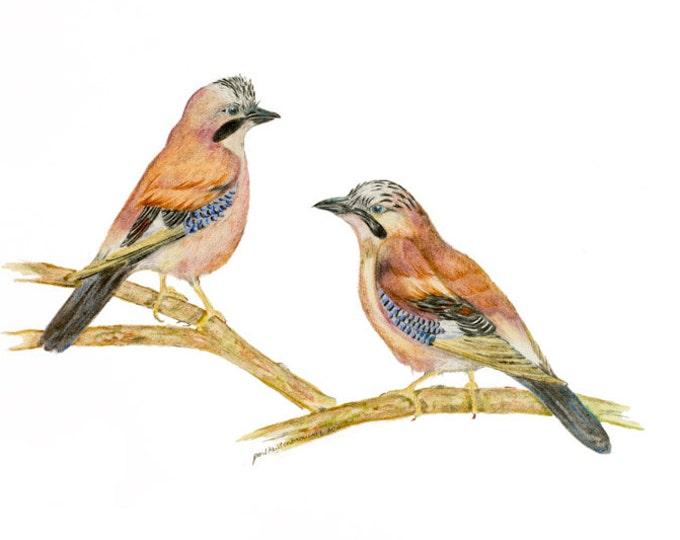 LIMITED EDITION of Eurasian Jay, Garrulus glandarius, Jays, Eurasian Jay, Naughty Clever Smart Bird, Art Print, Blue feathers, Bird of Prey