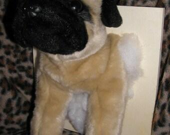 Stuffed Animal Taxidermy - Pugsley