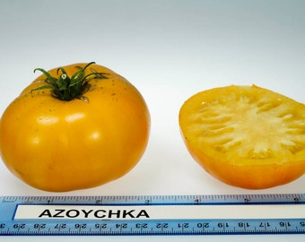 Azoychka Heirloom Russian Tomato Seeds Rare