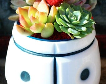 Smiley - Lovely Succulent Gift of Echeveria, Graptoveria, Adolphi Plants in Glass Planter & Mini Heart
