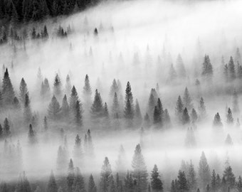 Sierra Nevada, Forest Fog Photography, Landscape Photography, Nature Art, California, Large Wall Art, Black and White, Travel, Enchanted