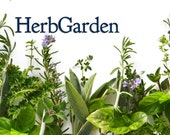 Herb Garden Seeds, Kitchen Garden Gift Pack - Windowsill Herbs, 3 packs of Herbs for Cooking, Sweet Basil, Cilantro and Chives