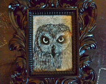 owl gaze - framed