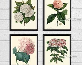 BOTANICAL Print SET of 4 Art  Antique Beautiful Hydrangea Flowers Plants Spring Summer Garden Nature Vintage Wall Home Decor to Frame