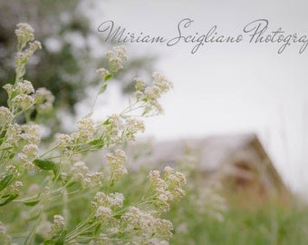 Rustic Photography, Old Barn photo, country photography, farm photography, farmhouse decor, rustic wall art, farm photography, rustic decor