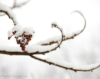 Snow Heart - Art Print - Nature Photography - Home Decor - Nature Wall Art - Trees - Branches - Snow - Winter - 8x12