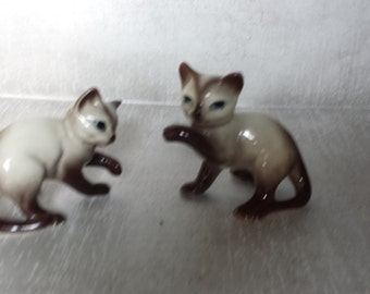 Siamese Kitties Playing
