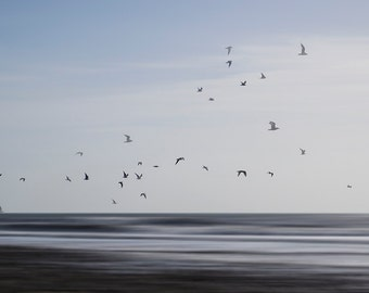 Fine Art Photographic Print - Charmouth Gulls