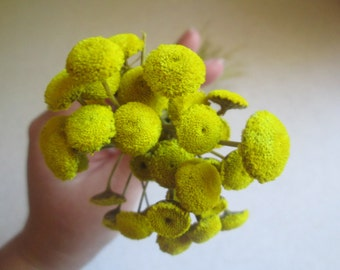 Yellow Floral Buttons for DIY crafts, Wedding Decor, 30 dried flowers