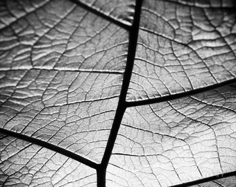 Nature Photography - Plant, Leaf, Veins, Black and White, Texture, Macro, Close Up, Photograph, Wall Art, Botanical, Abstract