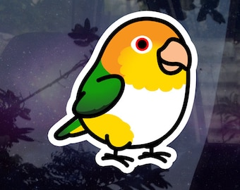 BACK ORDERED: Chubby White Bellied Caique Sticker