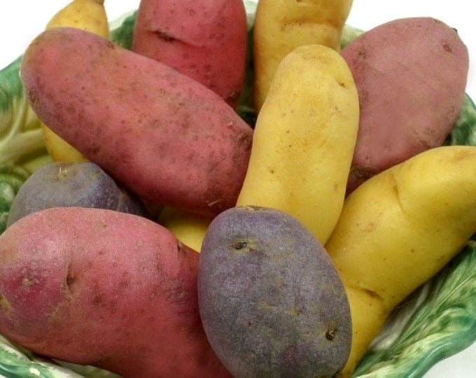 Fingerling Seed Potato Assortment Certified Organic 1 Pound Gourmet Mix - Spring Shipping Non-GMO