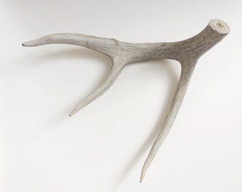 1 piece of authentic deer antler