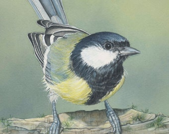 Great Tit bird print 5 x7 inches watercolor