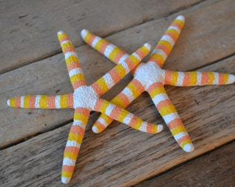 """Painted Starfish, """"Candy Corn"""" (3-4"""") 