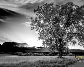 Looking Into the Heavans - - Vernon County Sunset, Single Tree in the field looking into the Heavenes
