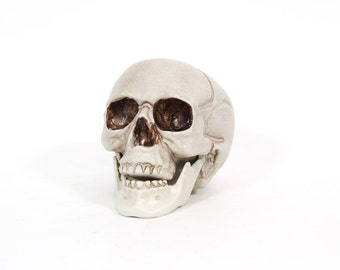 Plastic Skull Toy for Craft Supply Assemblage Mixed Media